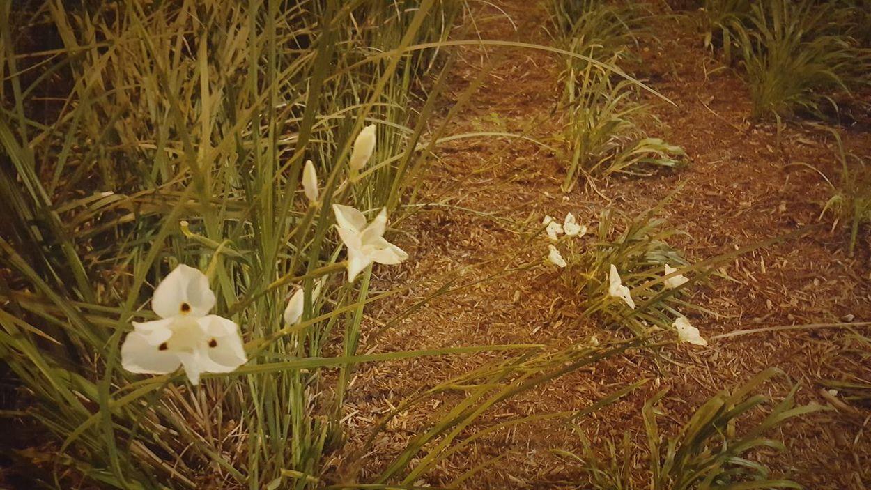 Flowers,Plants & Garden Flowers At Night
