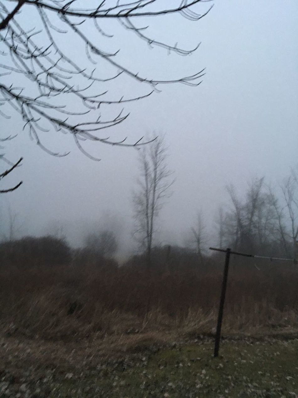 A foggy day Tree Tranquility Tranquil Scene Bare Tree Beauty In Nature No People Scenics Outdoors Day Fog No Filter, No Edit, Just Photography Exceptional Photography Eyem Best Shots Nature_collection Taken On Mobile Device Eyeem Photo Winter Checkthis Out EyeEm Masterclass