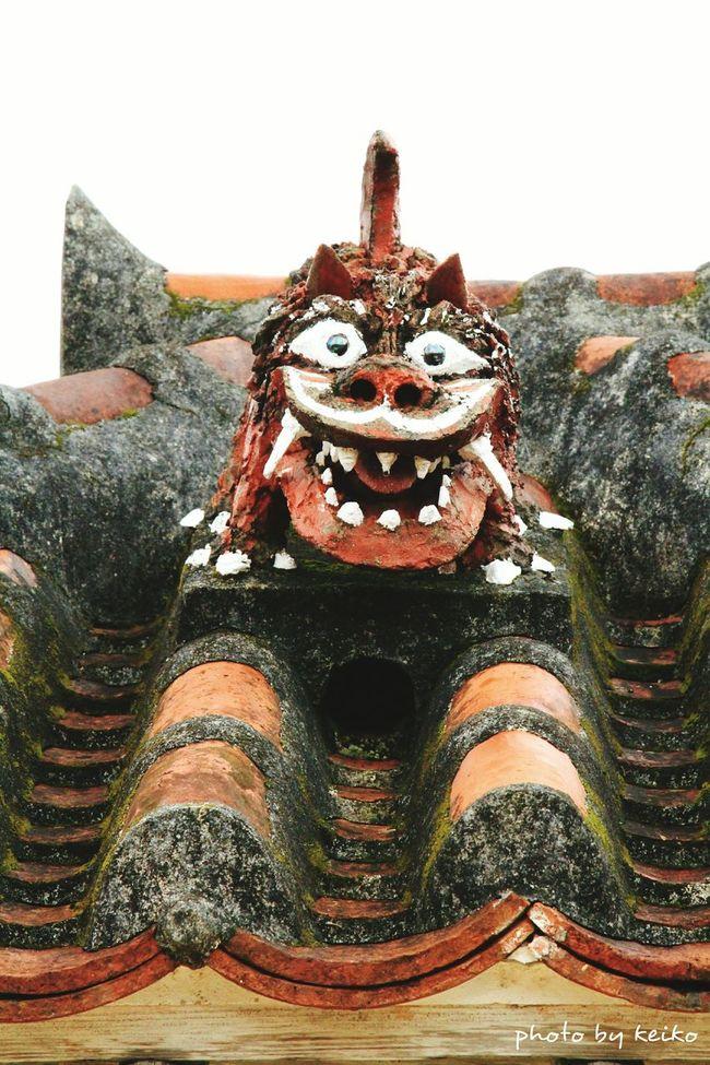 シーサー 竹富島 Okinawa Nature_collection Eye4photography  Japan Scenery 沖縄 EyeEm Best Shots Japan Photography OKINAWA, JAPAN Eyeemphotography EyeEm Gallery 写真好きな人と繋がりたい Enjoying Life Okinawa_kei