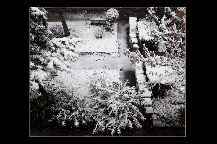 Outdoors Snow Snow ❄ Tree Rubbish Bins EyeEmNewHere 3XSPUnity Flying High