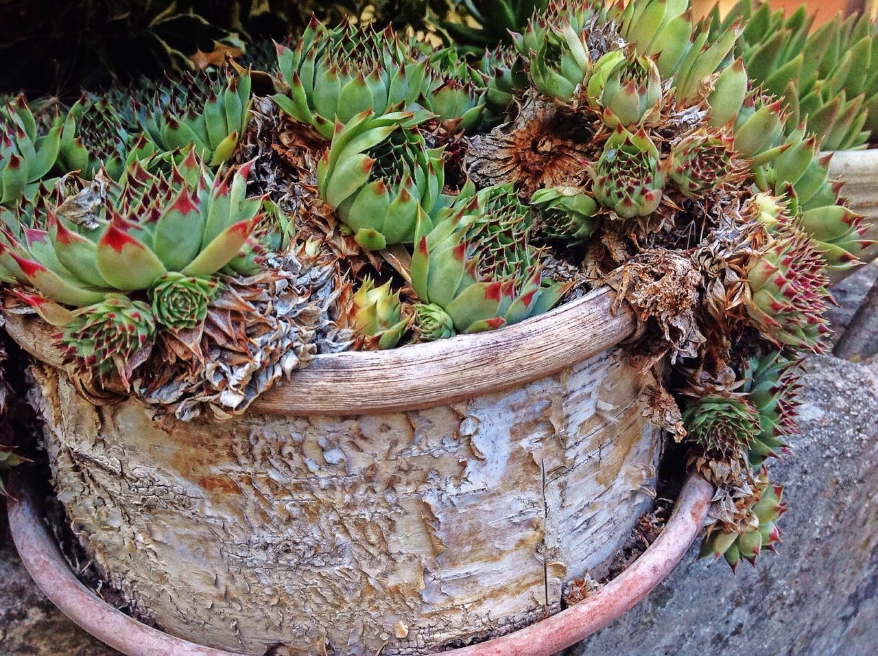 Detail Shot Of Pot Plant