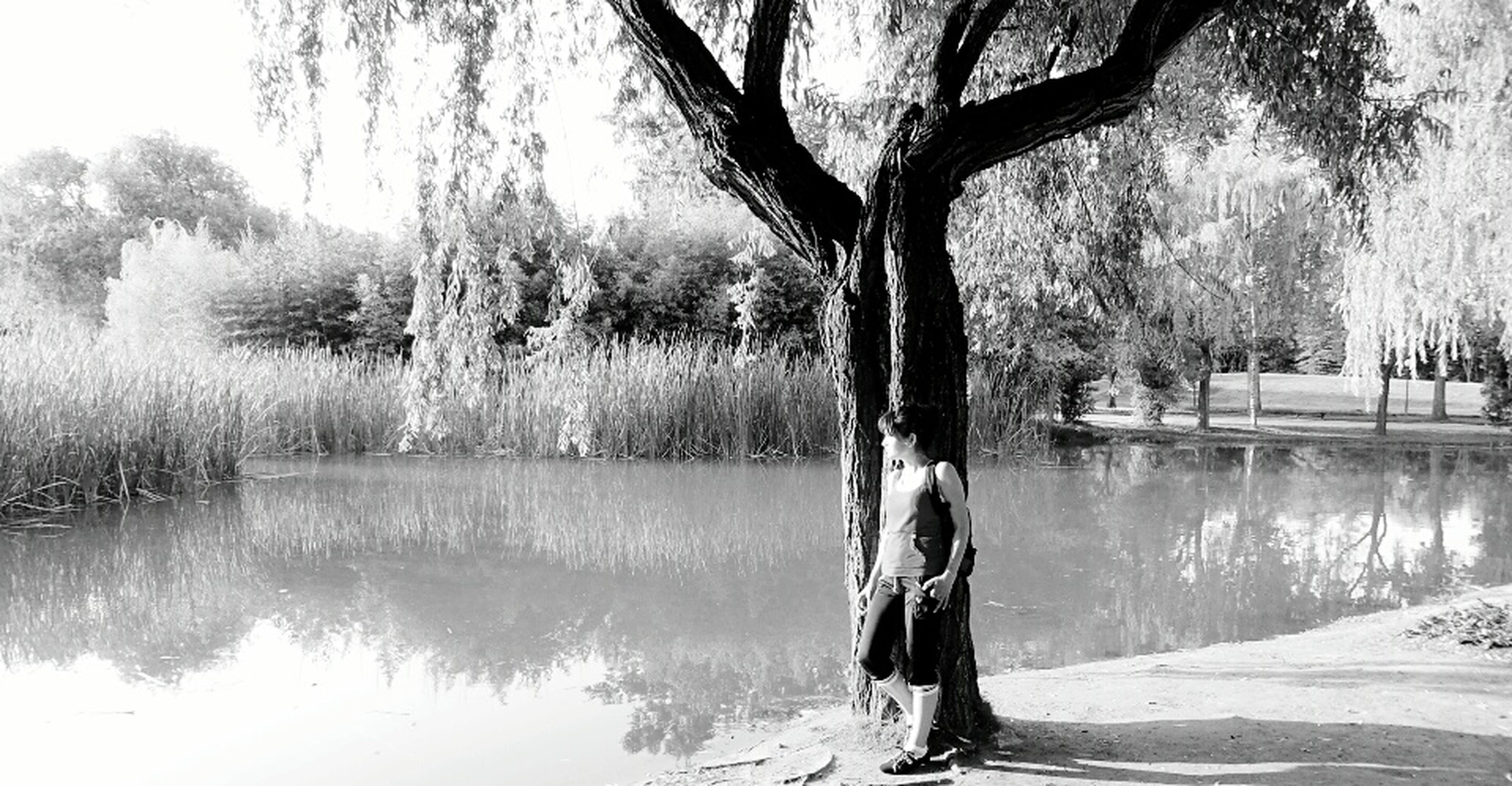 tree, water, tranquility, lake, tree trunk, tranquil scene, nature, reflection, bare tree, branch, growth, beauty in nature, river, scenics, clear sky, day, outdoors, no people, grass, lakeshore