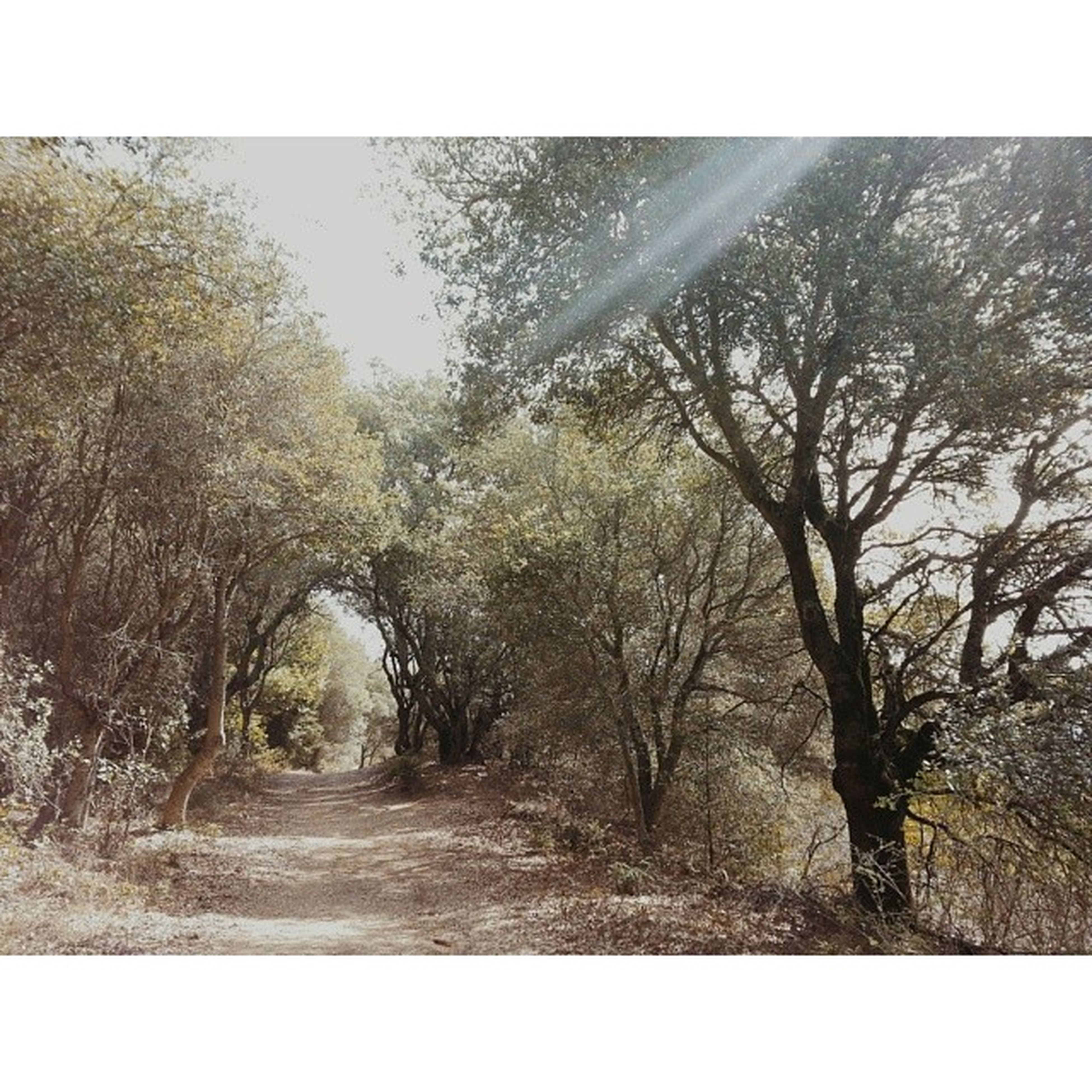 tree, transfer print, the way forward, tranquility, auto post production filter, forest, diminishing perspective, tranquil scene, growth, nature, beauty in nature, dirt road, vanishing point, scenics, branch, road, day, non-urban scene, sky, landscape