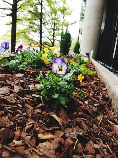 Flowers Flowerbed Dirt Nature Plant Outdoors Outside
