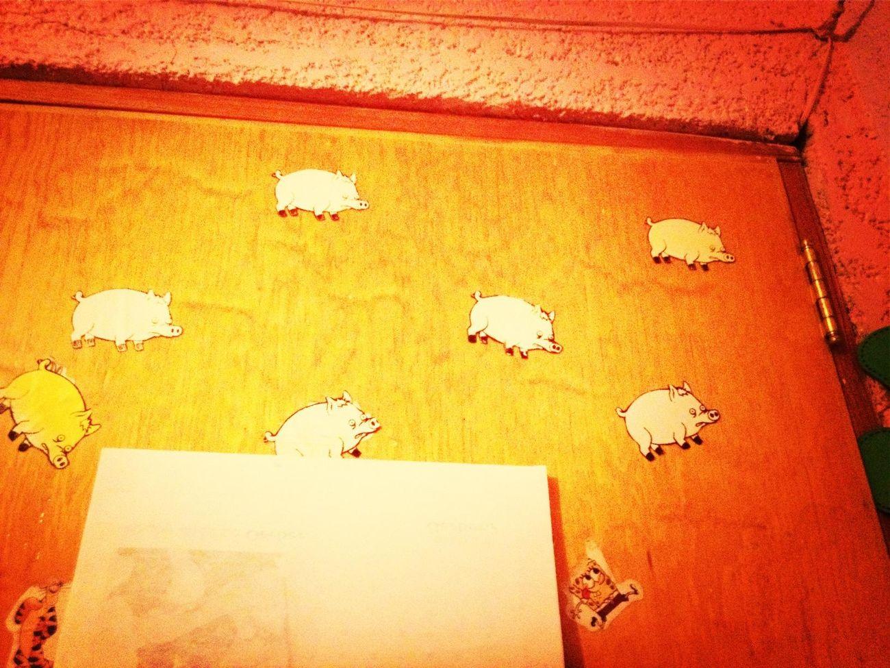 No me acordaba que tenía muchos puercos araña en mi puerta u.u viejos regalos