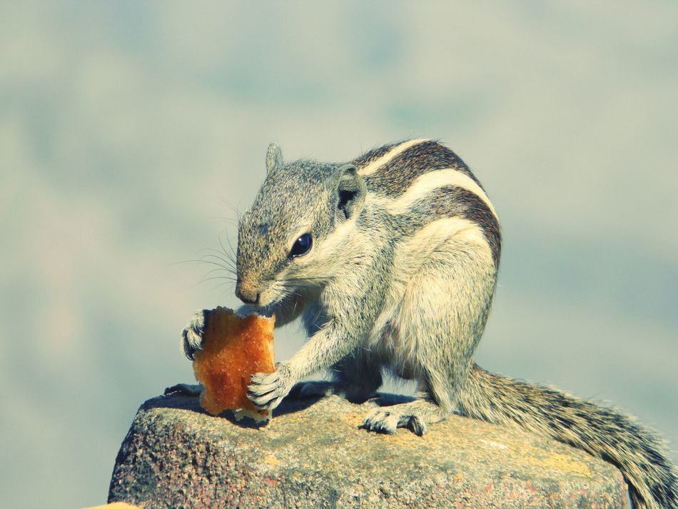 Beautiful stock photos of eichhörnchen, Animal Themes, Animal Wildlife, Animals In The Wild, Close-Up