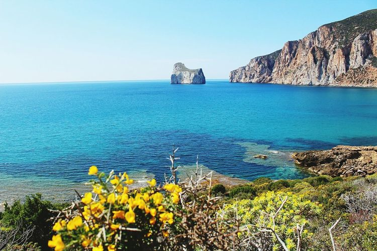 Pandizucchero,masua,sardegna Flower Landscape Beach Beauty In Nature Water Day Travel Destinations Canon1300d Italy🇮🇹 Sulcis Sardinia Sardegna Pandizucchero Nebida Masua
