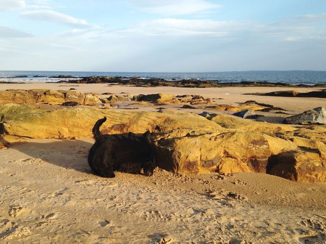 Dog Beach Sea Seaside Sand