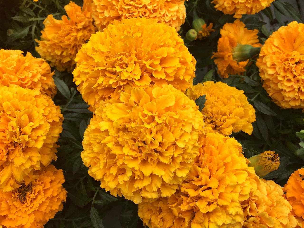 Flowers in the city's park under summer Abundance Beauty In Nature Blooming Blossom Botany Close-up Flower Flower Head Fragility Freshness Full Frame Growth In Bloom Nature Orange Color Outdoors Petal Plant Scenics Softness Springtime Stock Image Tranquility Vibrant Color Yellow