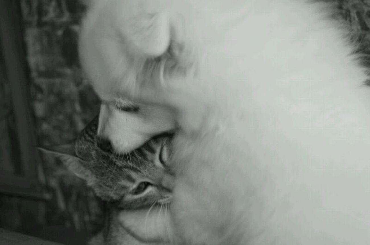 Love ♥ Cat Dogs Black & White Hug ❤