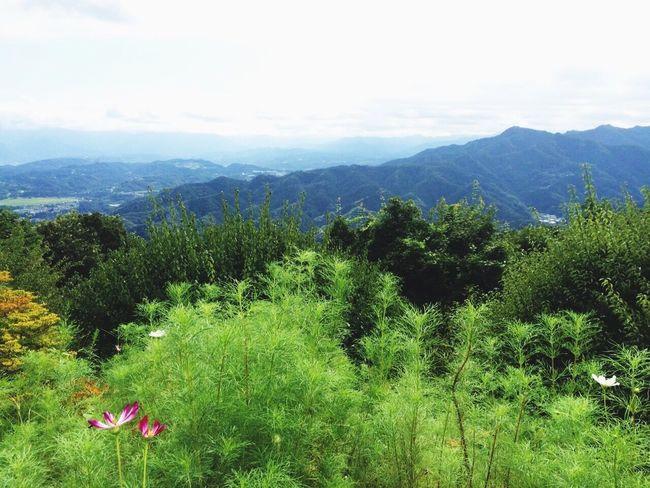 Woods Taking Photos Walking 絶景 Mountain Enjoying Life Superb View Nature The Top  Enjoy Chichibu Landscape Forest Hiking 癒し Healing