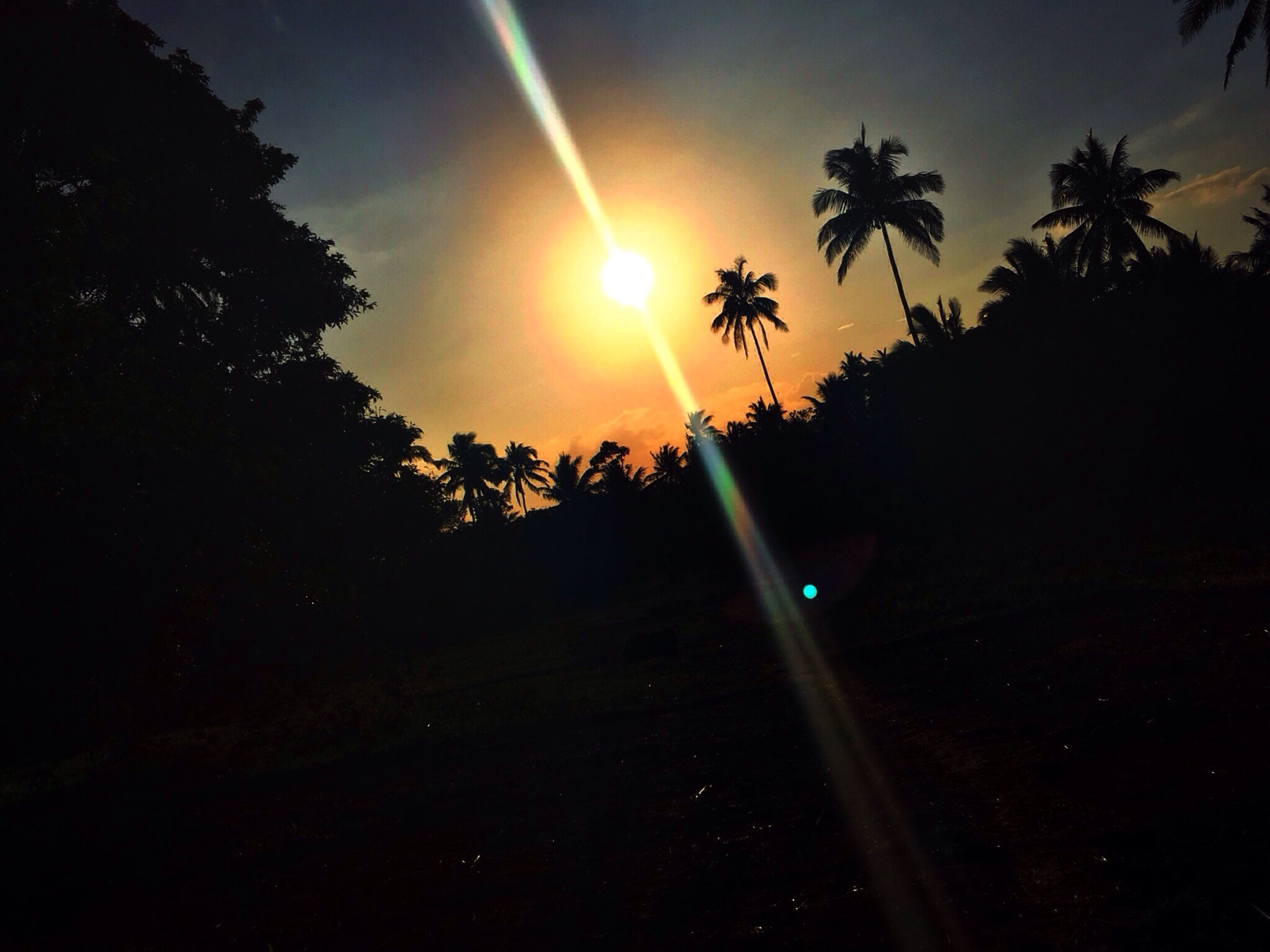 sunset, tree, silhouette, sun, sky, tranquil scene, tranquility, scenics, beauty in nature, nature, sunlight, idyllic, landscape, palm tree, orange color, cloud - sky, lens flare, sunbeam, growth, outdoors