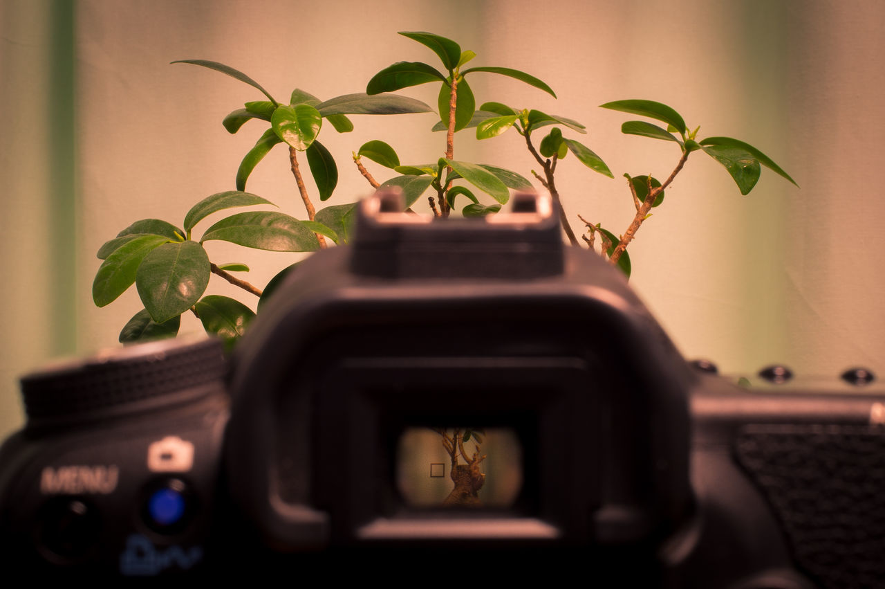 Day 77. After a long day finaly a fresh idea went through my head. Just an idea and so much fun while composing it. 365 Camera Camera - Photographic Equipment Close-up Environment Growth Indoors  Leaf Looking At Camera Looking Through An Object No People Plant Potted Plant View Zoom