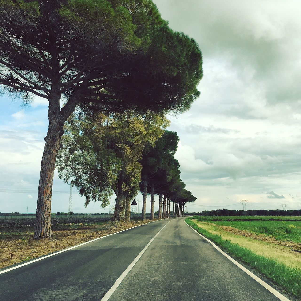 Tree Road The Way Forward Nature Sky Transportation No People Growth Tranquil Scene Day Landscape Scenics Tranquility Green Color Beauty In Nature Outdoors Cloud - Sky Grass