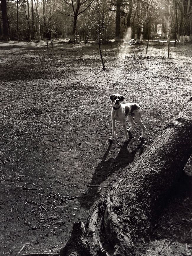 I Love My Dog Dog Sunshine In The Forest Blackandwhite Black And White Monochrome Light And Shadow Silhouette Sunset Silhouettes