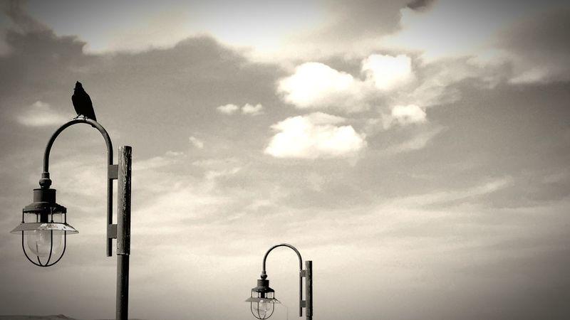 A crow on a pole. Crow Pole Reststop