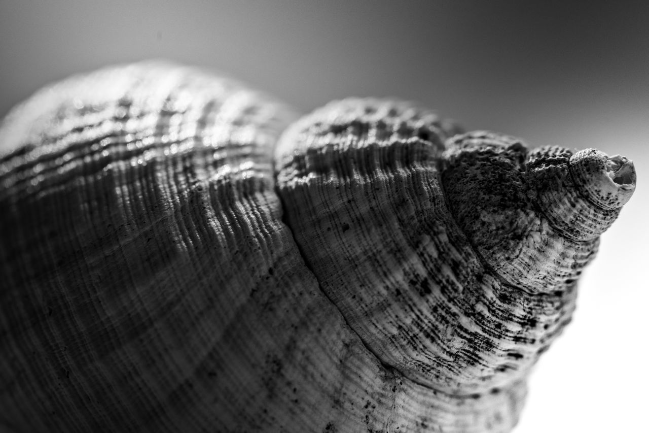 Blackandwhite Close-up Day Macro No People One Person Shadows & Lights Shell