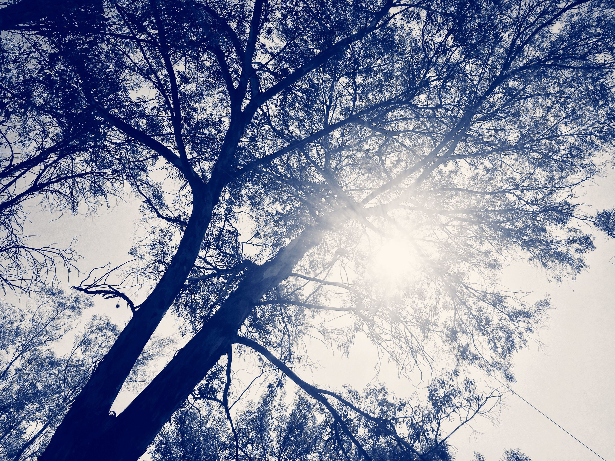low angle view, tree, sun, silhouette, branch, sunbeam, sunlight, nature, sky, tranquility, beauty in nature, lens flare, growth, bare tree, back lit, scenics, no people, day, outdoors, bright