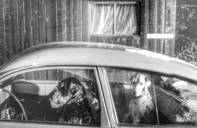 Hit the pedal, let's getta hell out of here! Taking Photos Eye4photography  Dogs TBT  From My Point Of View Streetphotography Car Saab Norway monochrome
