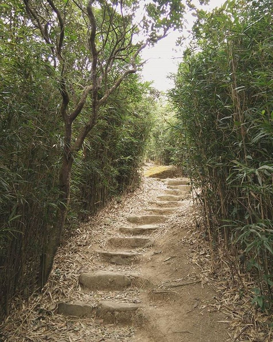 🌲🚶 ----- ------ ------ Hiking Path Shrubs Steps Countryside Hkig Discoverhongkong Instameethk Oneplusone Art Photography EyeEm Hillclimb Wilsontrail