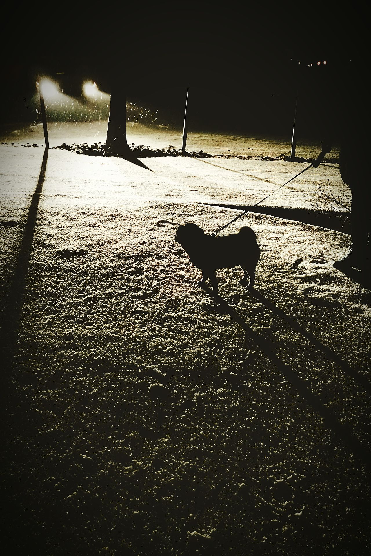 Pug Pug Life  Snowing Snow Night LightMammal Animal Themes Shadow Domestic Animals Dog Nature Outdoors No People Pets Sunset Tree Day First Eyeem Photo