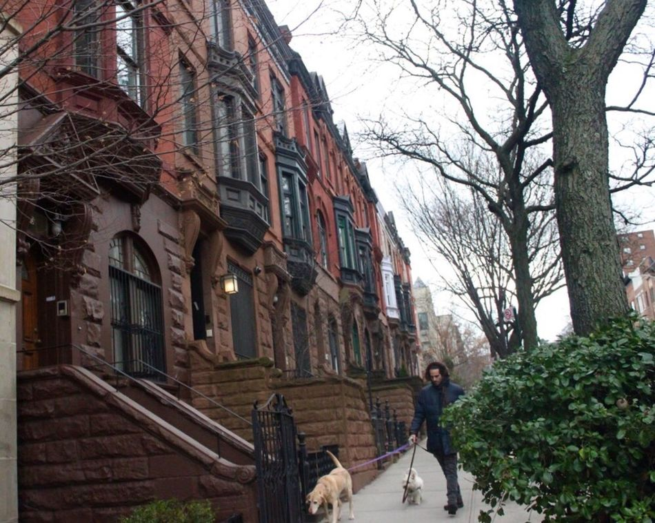 From Harlem with love Building Exterior Architecture Full Length Dog Walker Brownstones Outdoors Day Lovedogs Overcast Skies Winterdays Adapted To The City