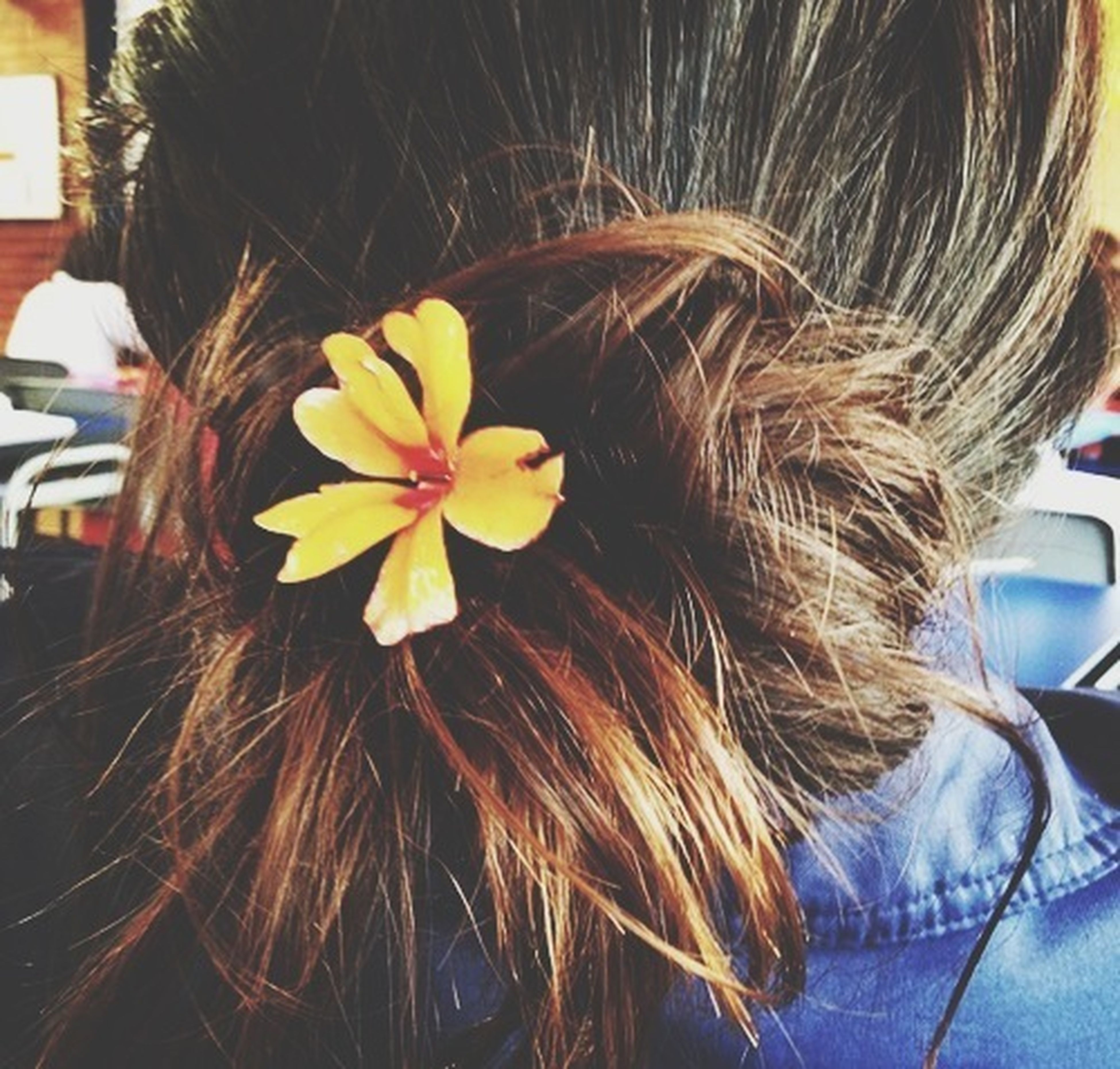 flower, indoors, long hair, close-up, fragility, freshness, human hair, person, headshot, flower head, petal, holding, young women, focus on foreground, lifestyles, leisure activity, yellow, brown hair