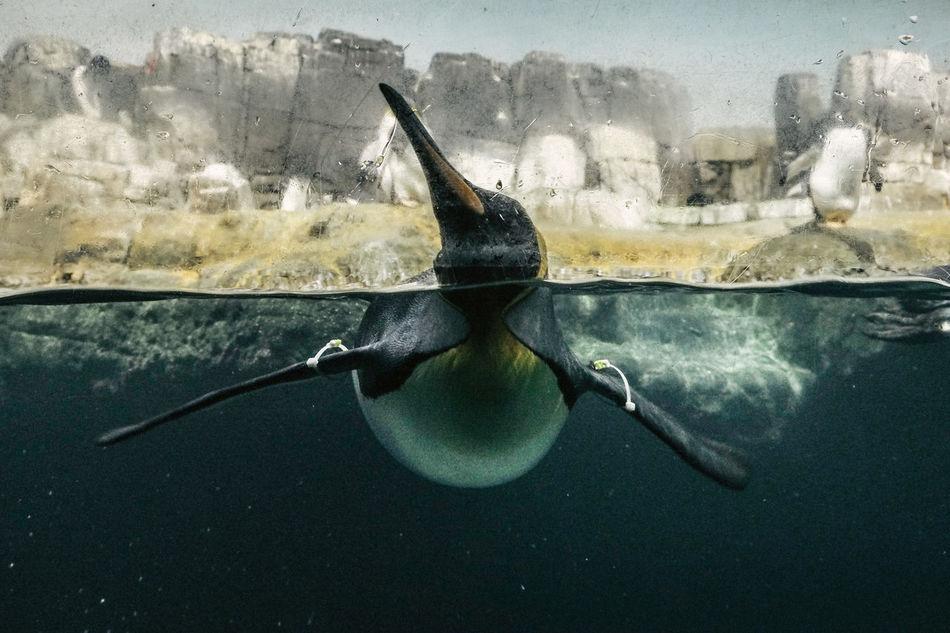 Beautiful stock photos of swimming, Animal Themes, Animal Wildlife, Animals In The Wild, Aquarium