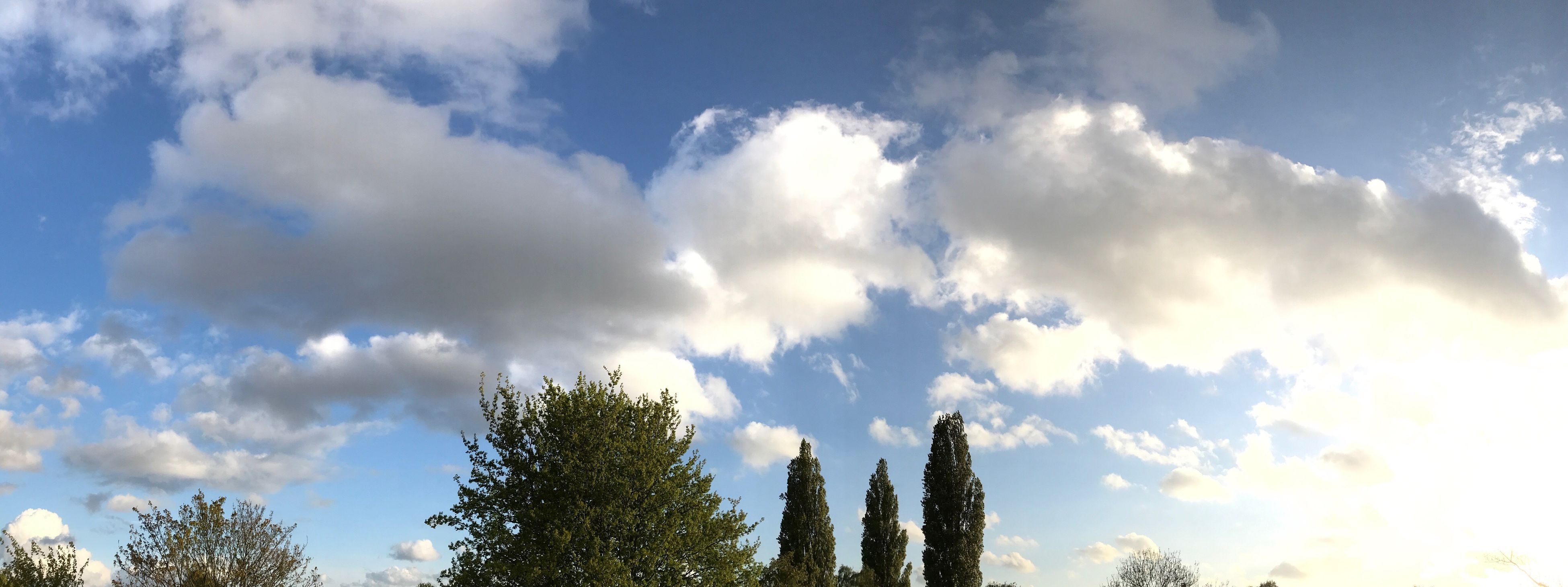 low angle view, cloud - sky, tree, sky, nature, no people, beauty in nature, growth, outdoors, day, treetop