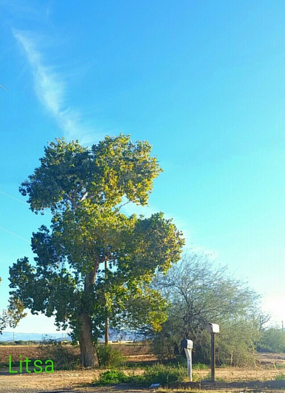 tree, nature, tranquil scene, tranquility, no people, day, beauty in nature, outdoors, landscape, scenics, blue, sky, clear sky