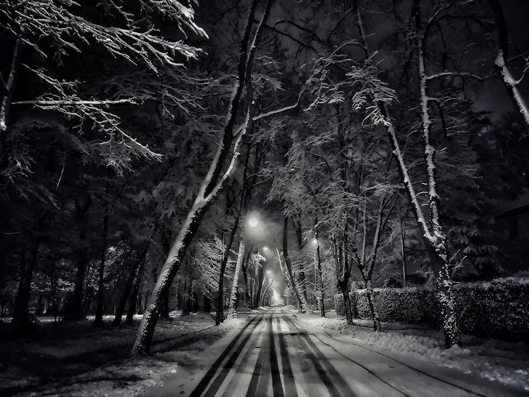 Blackandwhite Black And White Bw_collection Bwphotography Bw_lover Transportation Tree Road Outdoors Nature