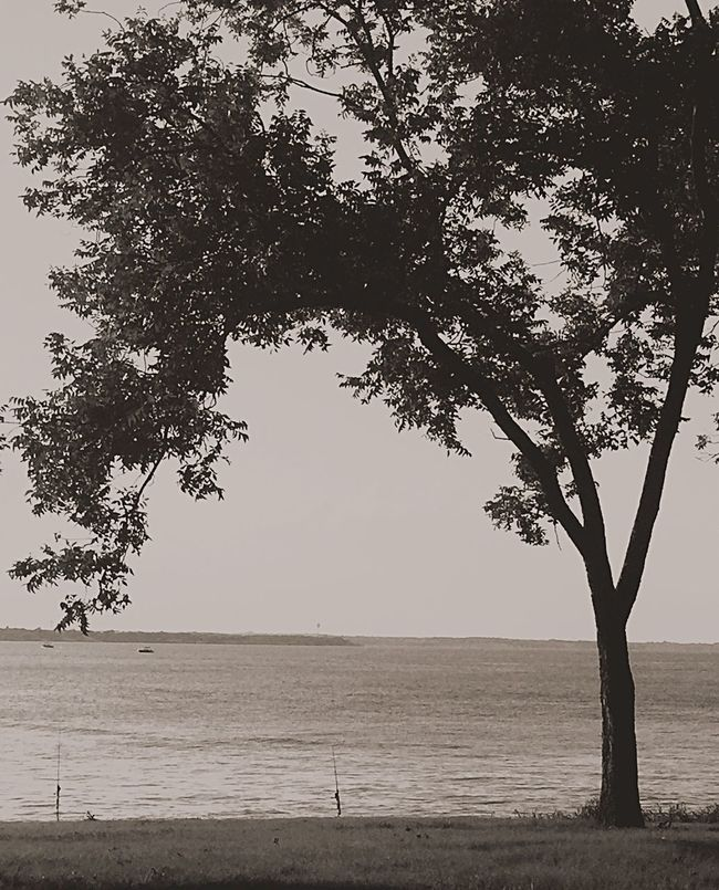 Tree Water Tranquil Scene Sea Horizon Over Water Tranquility Beach Tree Trunk Branch Scenics Nature Growth Calm Beauty In Nature Solitude Shore Sky Day Outdoors