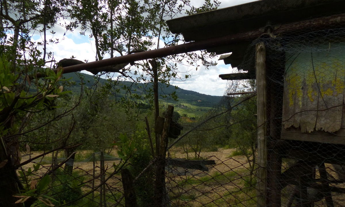 Beauty In Nature Chickenhouse Day Firenze With Love Firenzemadeintuscany Growth Landscape Nature No People Outdoors Sky Tree