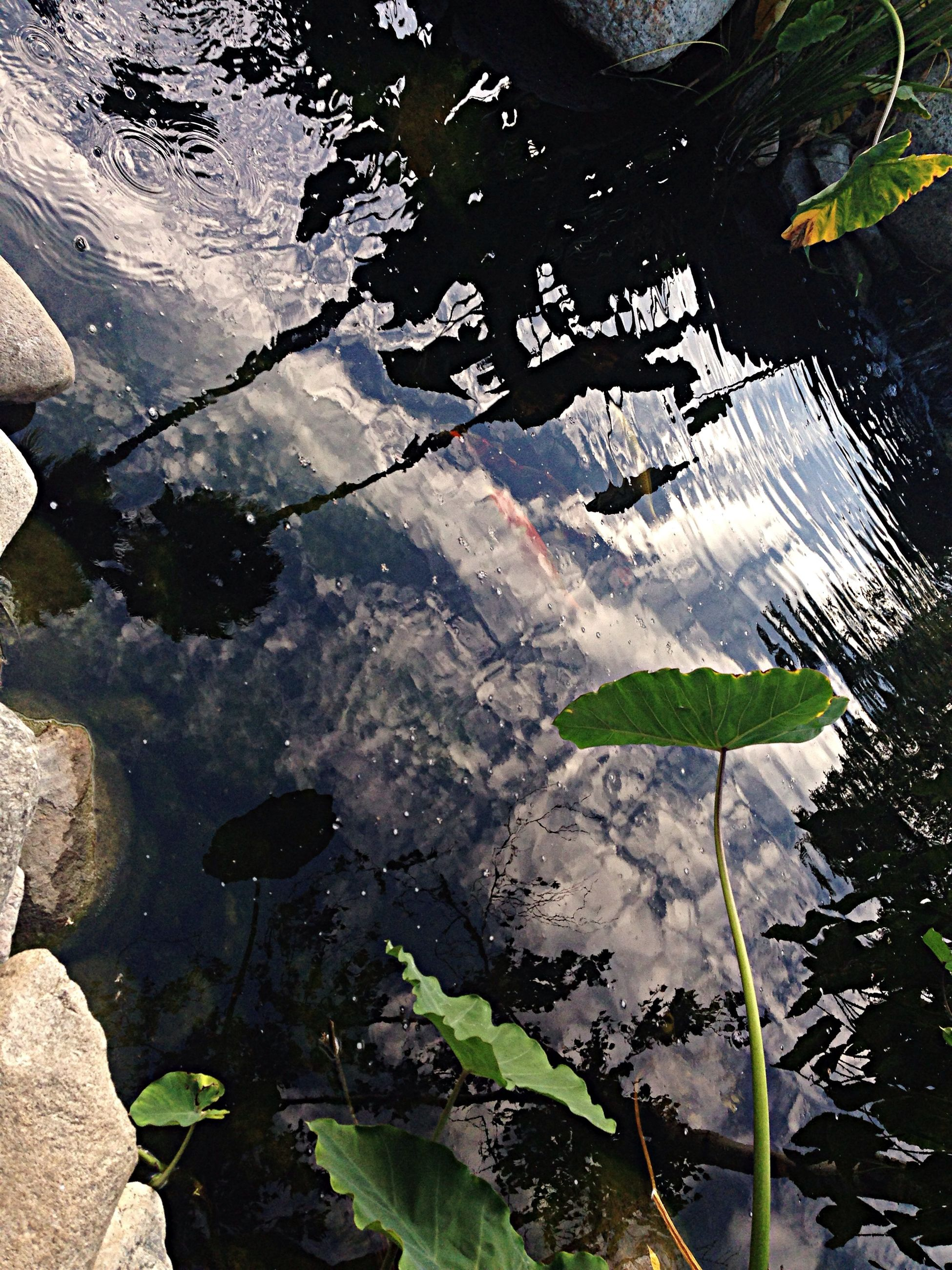 water, leaf, reflection, lake, high angle view, pond, nature, plant, tranquility, puddle, wet, beauty in nature, standing water, floating on water, outdoors, day, growth, river, no people, green color