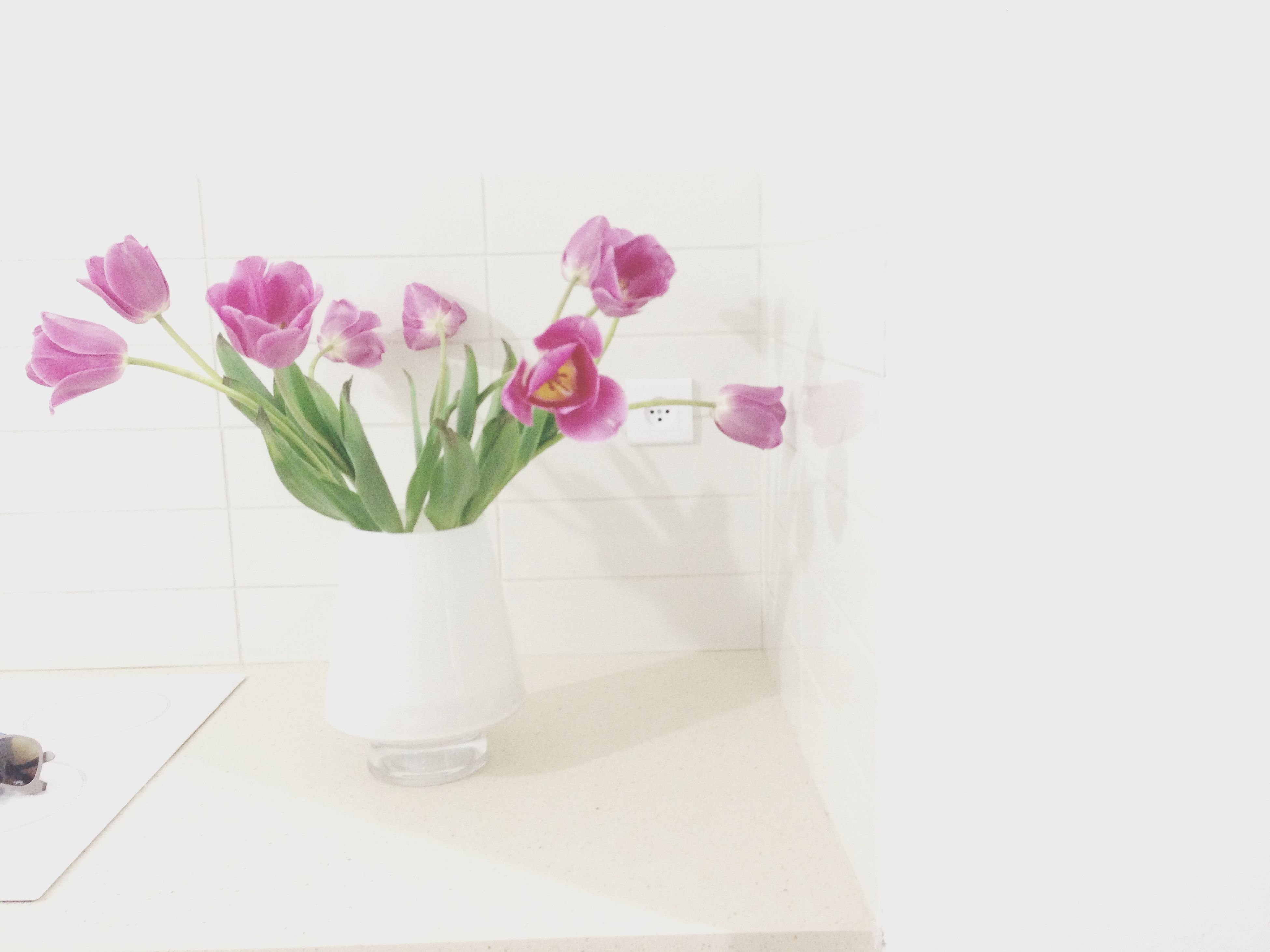 flower, fragility, vase, freshness, indoors, petal, wall - building feature, plant, pink color, flower head, growth, stem, beauty in nature, potted plant, copy space, decoration, wall, leaf, white background, nature