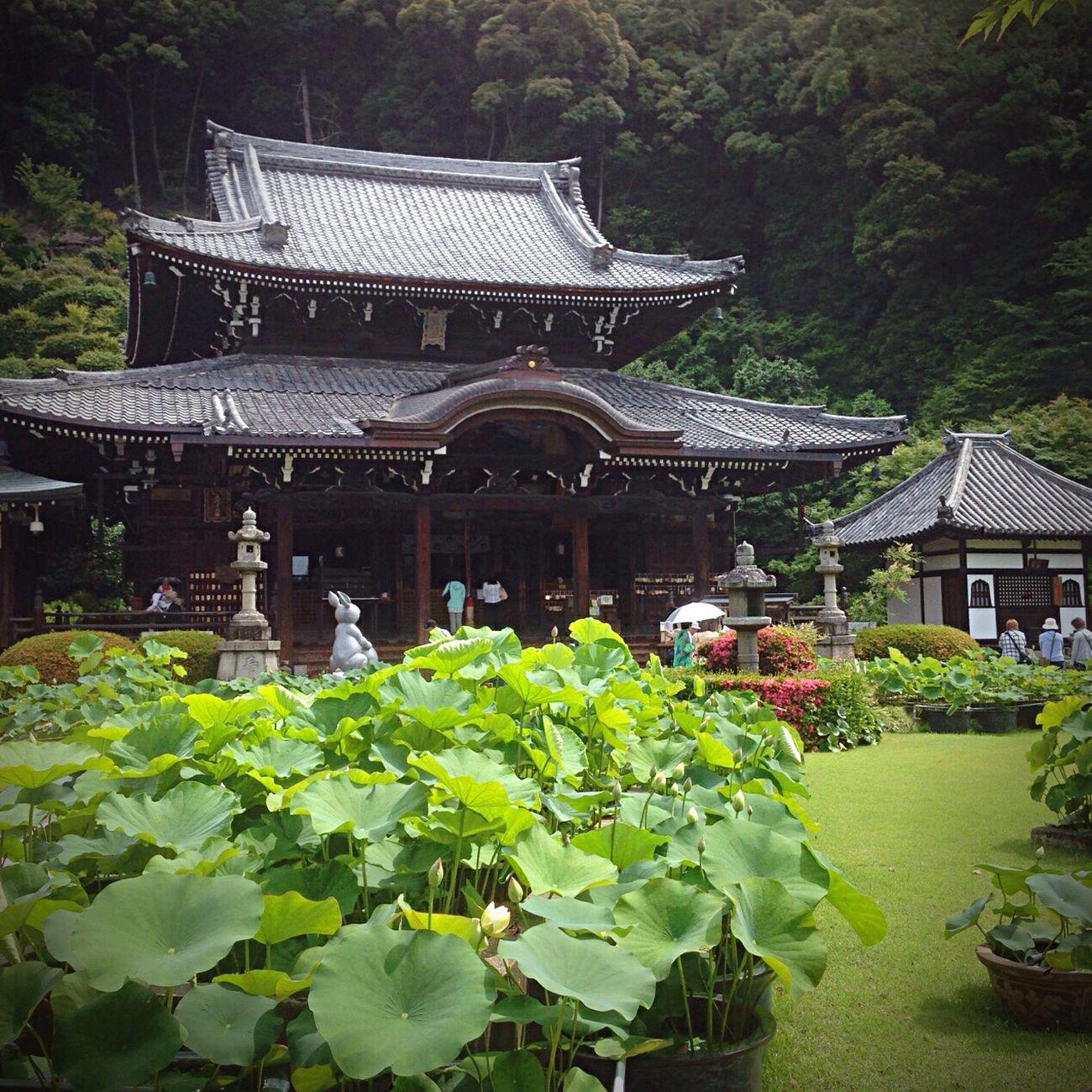 Kyoto Japan Mimurotoji Uji Temple 京都 日本 三室戸寺 宇治 寺