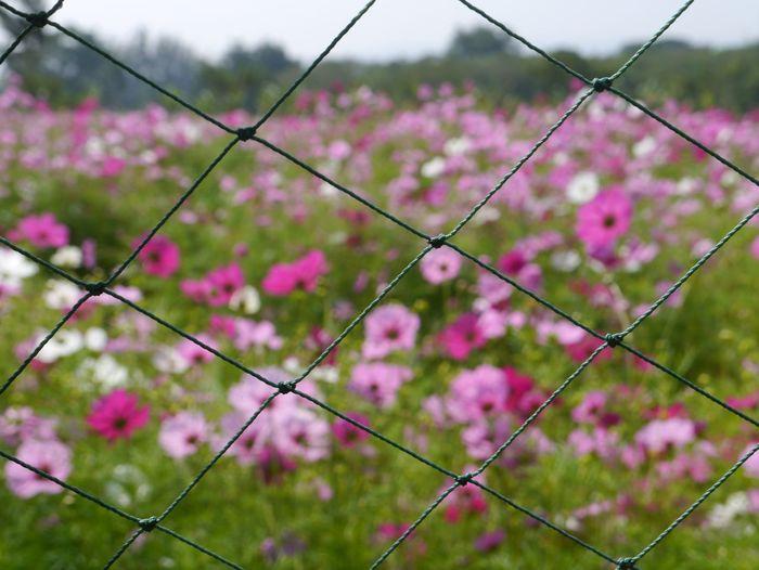 Flowers,Plants & Garden Pinky Field Enjoying Life Net