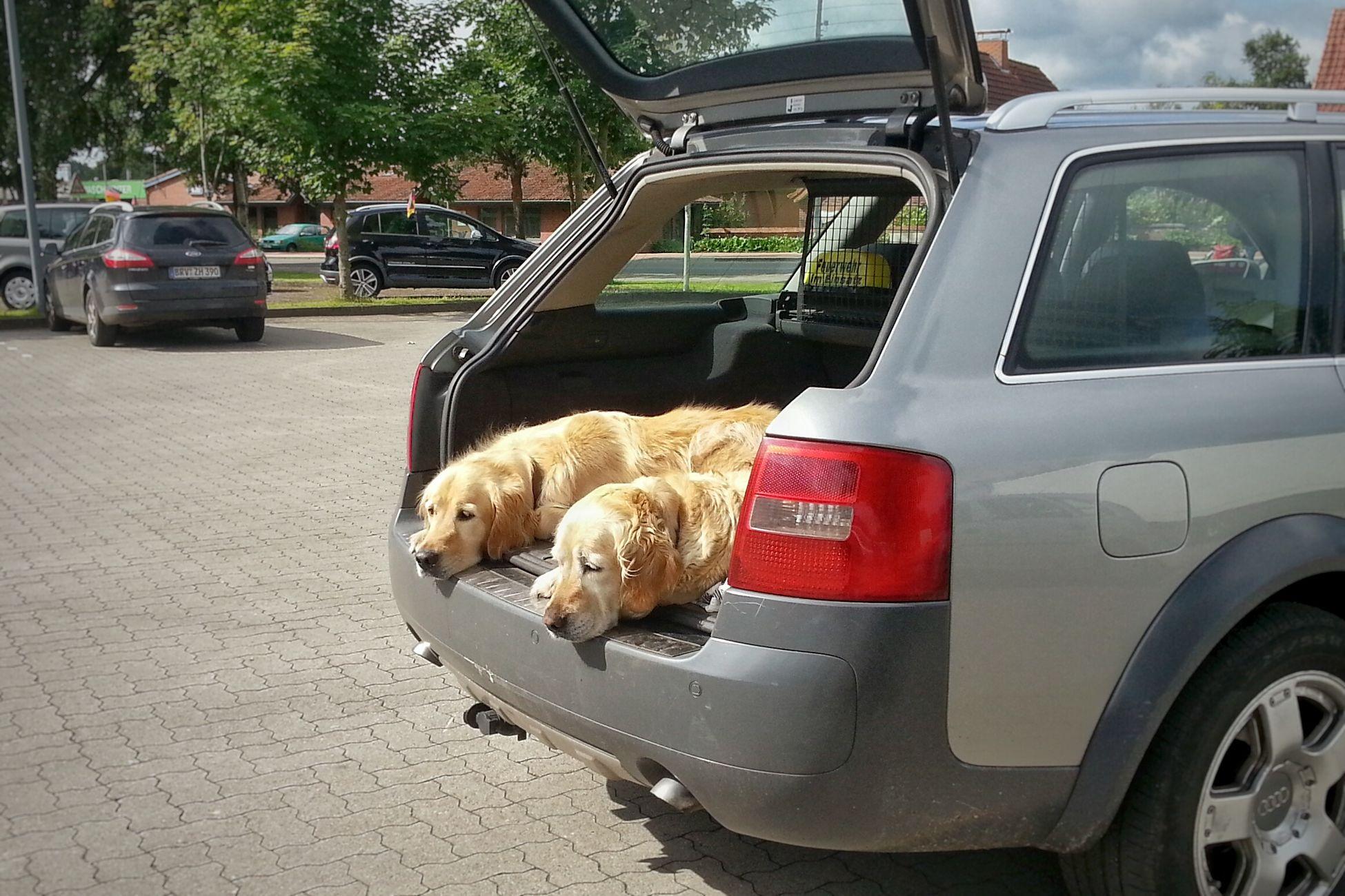 A Dogslife - Was für ein Hundeleben, So Muss Das sein. Gesehen auf einem Supermarktparkplatz in Niedersachsen.