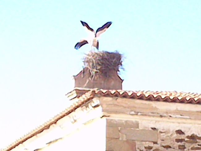 Cigüeñas en Alcántara Cáceres