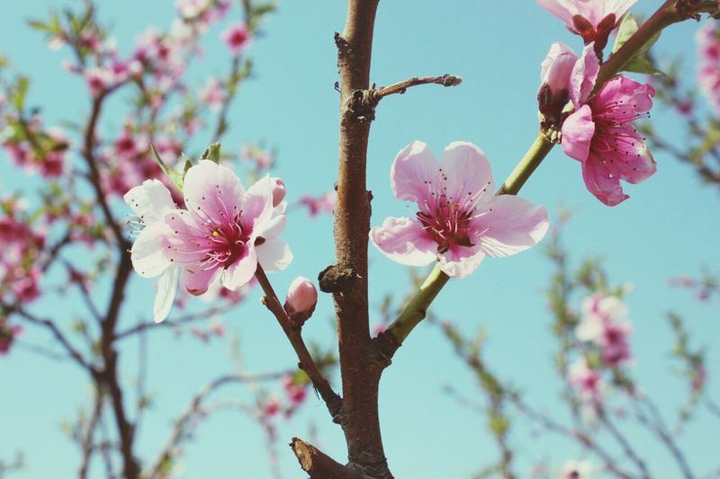 Travel Spring China Beautiful ♥