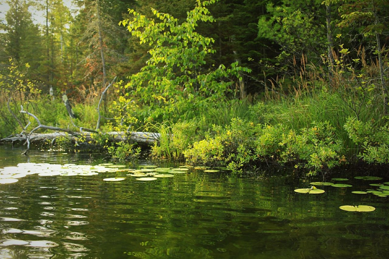 water, nature, reflection, lake, tree, outdoors, tranquility, tranquil scene, day, beauty in nature, waterfront, no people, forest, scenics, green color, growth