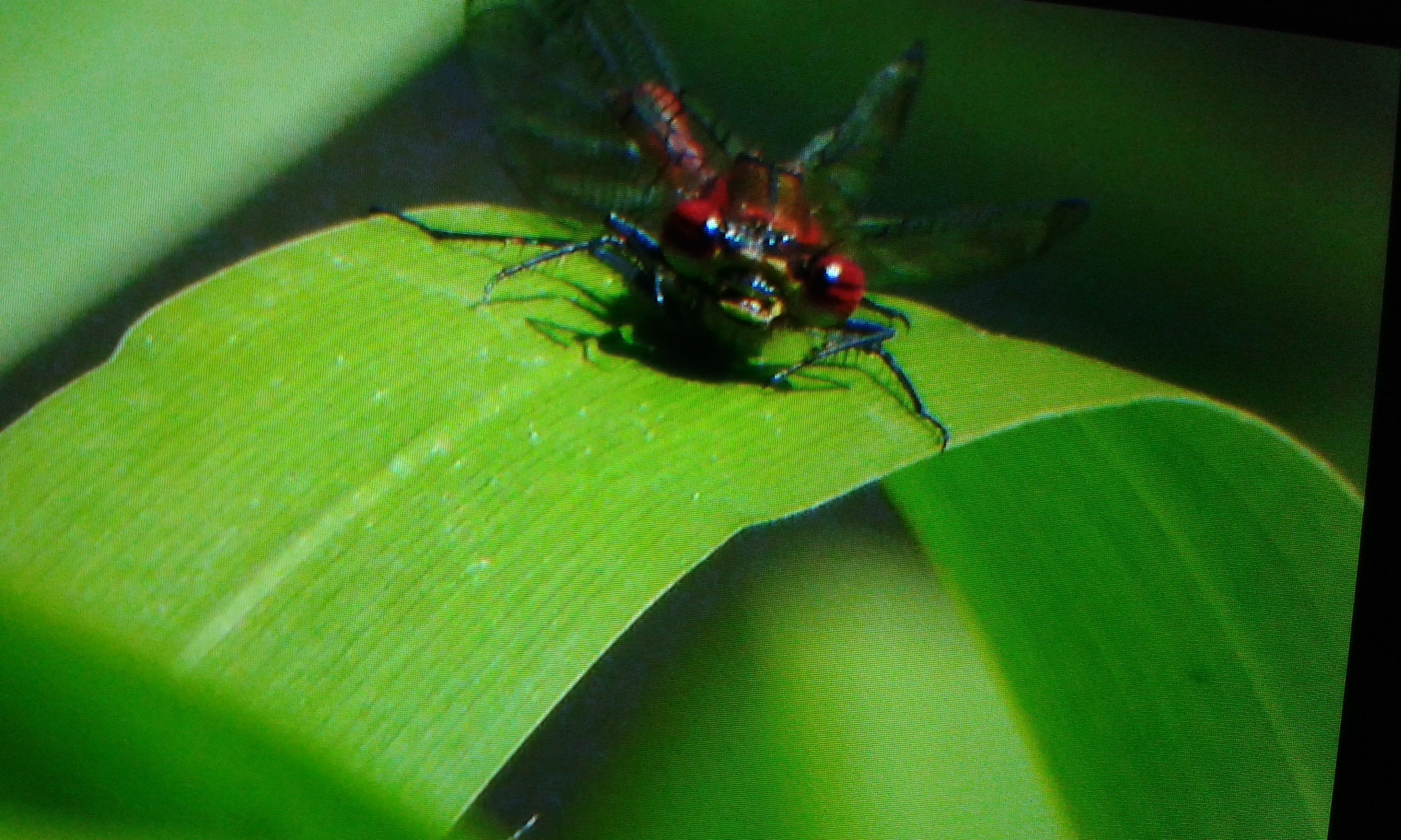 insect, one animal, animal themes, close-up, green color, indoors, selective focus, animals in the wild, spider, wildlife, no people, focus on foreground, black color, pattern, high angle view, day, nature, macro, extreme close-up, full frame