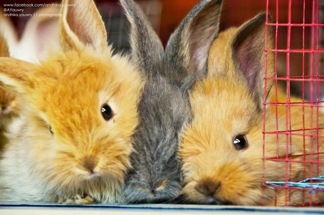 Rabbit..!! Rabbit Cute Pose EyeEm Indonesia