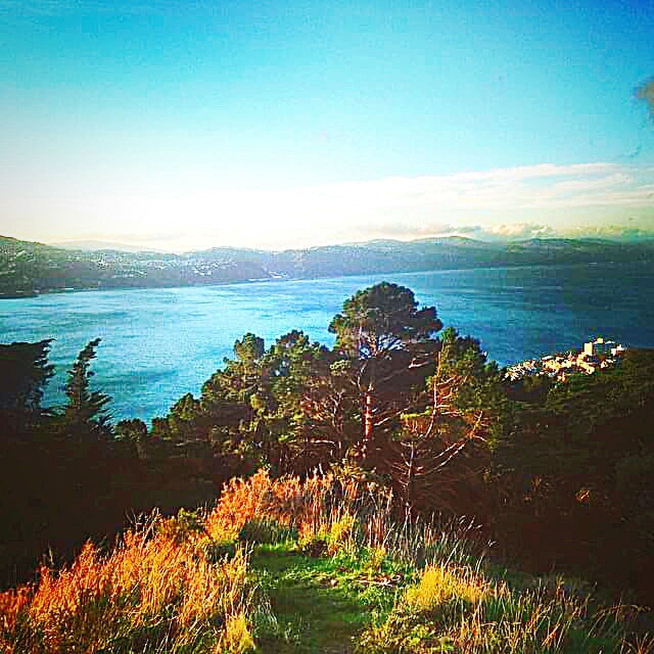 Wellington  Wellington Harbour Newzealand Newzealandscenary Panoramic View Photography Sky_collection Through My Eyes Photographer Life Through A Lens Taking Pictures From My Point Of View Enjoying The View Rainbow Colors Lake View Mountain_collection Taking Photos Clouds And Sky Climbing A Mountain Water_collection Trees Tree And Sky Panoramic Landscape Gopro Landscapes With WhiteWall