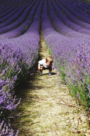 Agriculture Growth Flower Field Purple Farm Nature Lavender Rural Scene Real People Day Beauty In Nature Outdoors Plant Landscape Full Length child