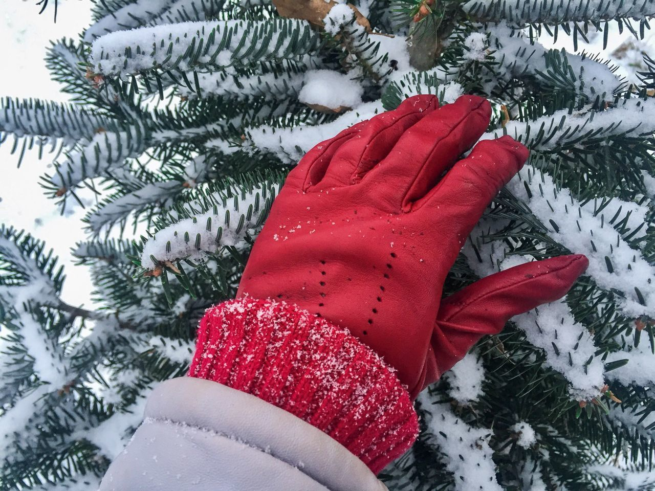 Woman hand wearing red glove touching pine cone tree covered in snow Celebration Red Winter Tree One Person Tradition Snow Celebration Event Cold Temperature Close-up Holiday - Event Real People Human Body Part Outdoors Day Human Hand Jacket Glove Hand Snow Touch Evergreen Needles Woman