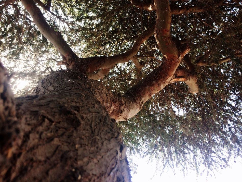 árbol Enfoque Tree Angulo EyeEmNewHere The Week On EyeEm Your Ticket To Europe Mix Yourself A Good Time