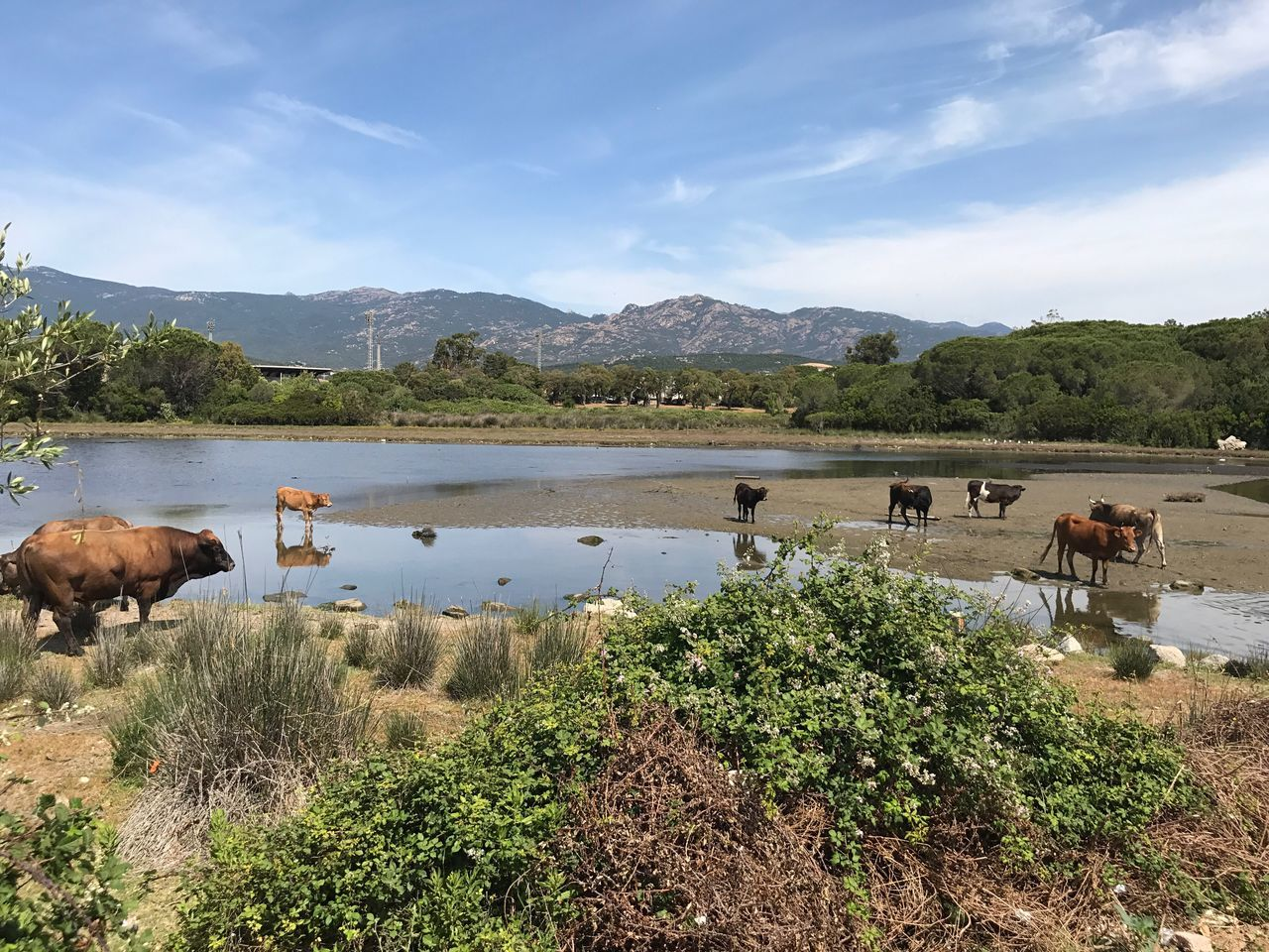Corsica Corse Mountain Water Animal Themes Lake Nature Mammal Tree Domestic Animals Sky Mountain Range Livestock Beauty In Nature Outdoors Scenics Day Cloud - Sky No People Large Group Of Animals Animals In The Wild Grazing