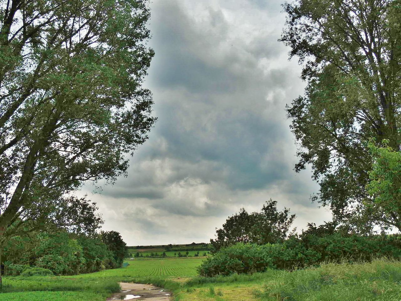 tree, nature, field, growth, day, cloud - sky, sky, green color, beauty in nature, grass, no people, outdoors, landscape, tranquility, scenics