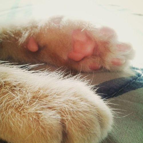 Patitas Catlovers Pelitos Pet Pets Cats Gato Cojinsito Cojines Uñas Cute Rubios Rosa Clemente Gatitos Tiernos Vidas Animalslover Animals Mascotas Iloveu  Teamo Baby Nene Pequeñito
